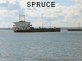 SPRUCE IMO7734167
